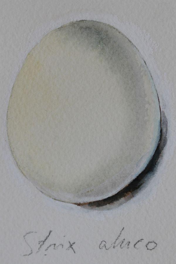 vesivärimaalaus lehtopöllön munasta