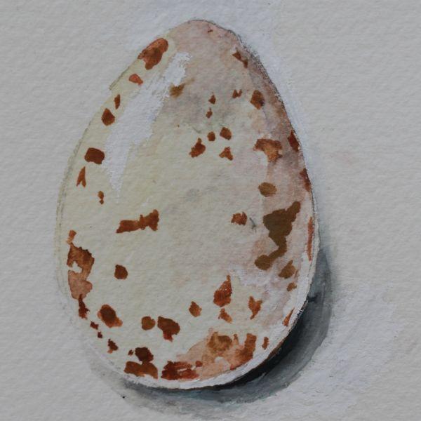 Vesivärimaalaus talitiaisen munasta