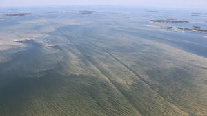 Levälauttoja Saaristomerellä heinäkuussa 2014.
