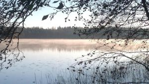 loppusyksyn järvimaisema, edessä tervalepän oksia