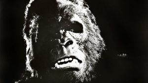 King Kong -elokuva ja Gorilla. Yle Kuvapalvelu.
