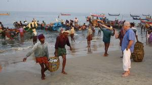 Rick Stein ihailee kalastajien saalista Keralassa