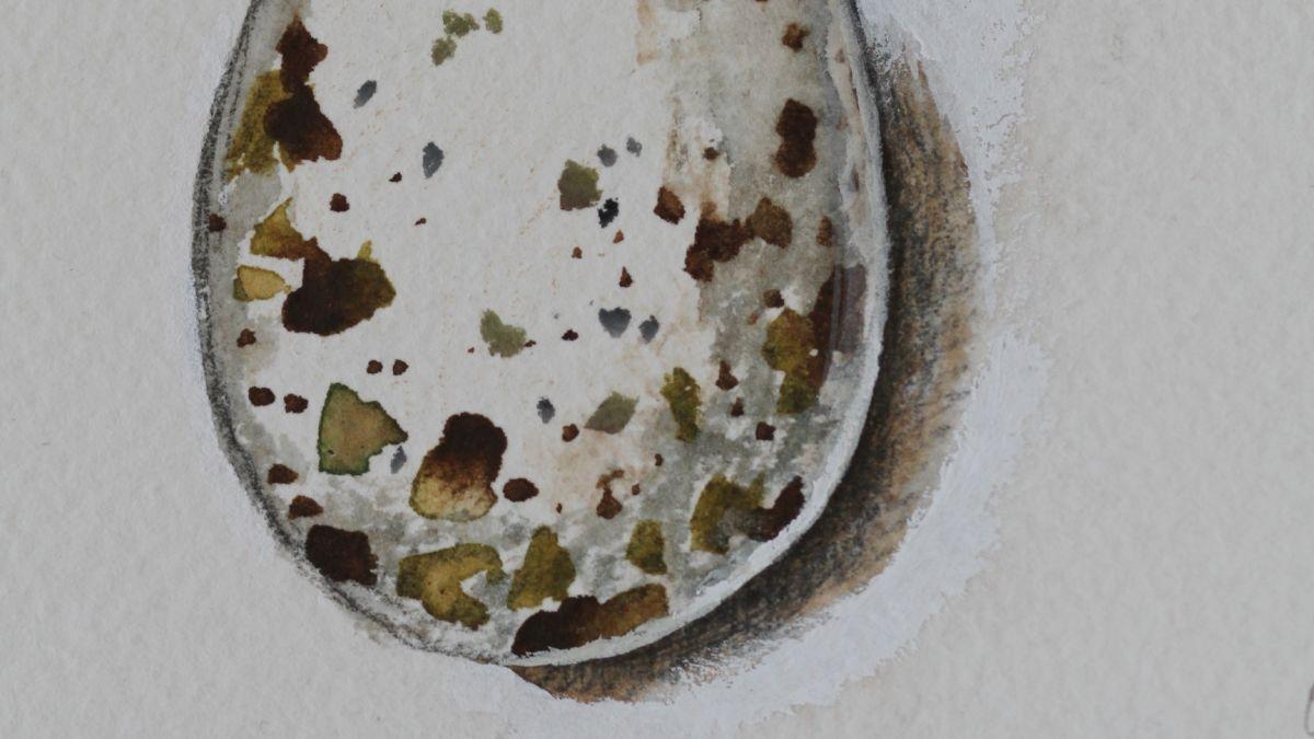 vesivärimaalaus haarapääskyn munasta
