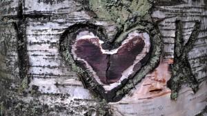 Ett hjärta inristat i en björk
