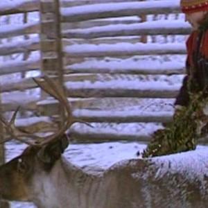 korinna korsström-magga ger mat åt renarna, 1997