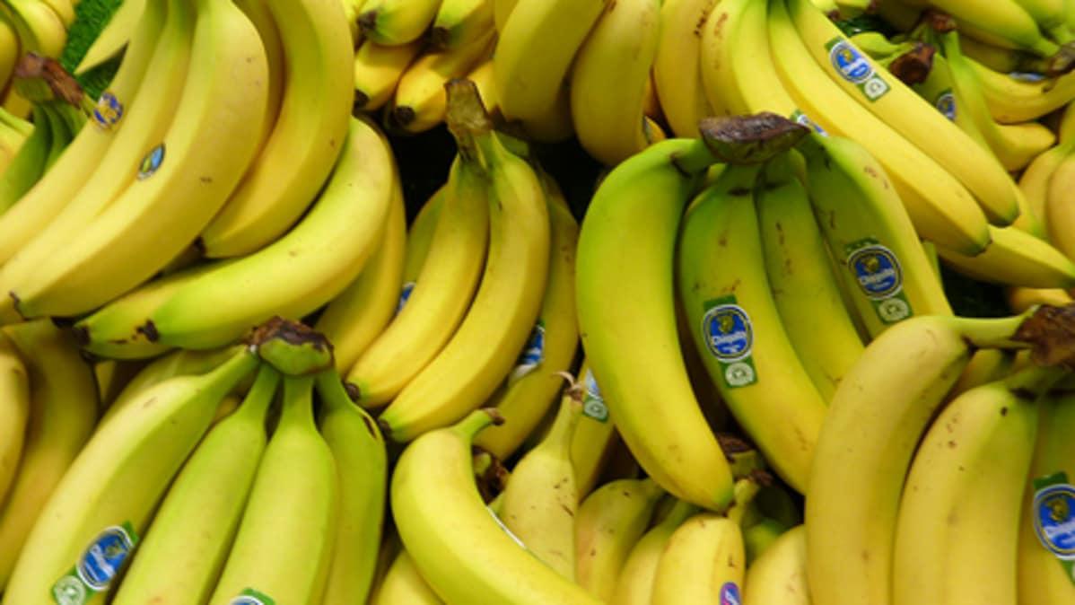 Banaanikärpästen Hävittäminen