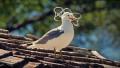 Video: Uutisvideot: Yritys haluaa pelastaa meren asukit muovijätteeltä