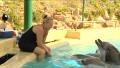 Видео: Uutisvideot: Tampereen delfiinit uudessa altaassaan