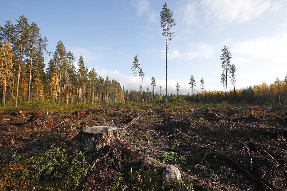 Kemijärvi Biotuotetehdas