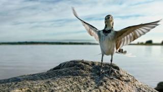 Audio: Linnuntietä maailman ääriin
