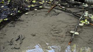 Audio: Lähteet ja metsäpurot katoamassa