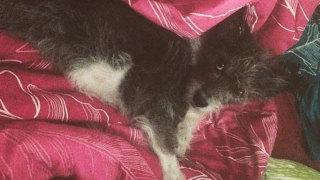 Audio: Rescue-koiran etsiminen on kuin treffipalstaa selaisi