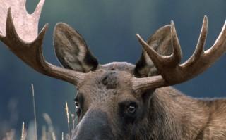 Audio: Eläinten historiaa 3/4: Metsän kuningas