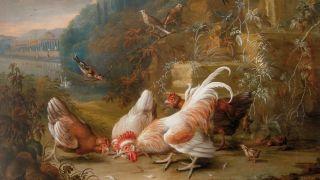 Audio: Kana synnyttää maailman, mutta kukko suojelee paholaiselta