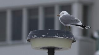 Audio: Lintujen talvi kaupungissa