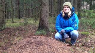 Audio: Muurahaisten elämää