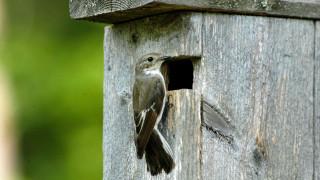 Audio: Miljoona pönttöä ja miljoonia lintuja