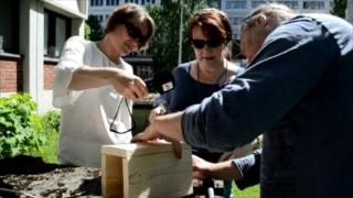 Audio: Pesintöjen määrä riippuu naaraan kunnosta - koirashan on aina kunnossa, letkauttaa Juha Laaksonen