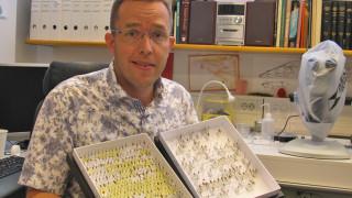 Audio: Hyönteistutkija tuntemattomien loispistiäisten ja rikostutkimuksen maailmassa