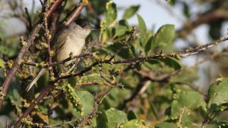 Audio: Lintuharrastaja Lahtinen aamutoimissa