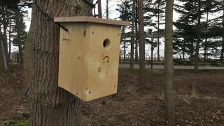 Audio: Presidentti Sauli Niinistön ja rouva Jenni Haukion linnunpönttöjen asukit