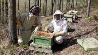 Audio: Mehiläistarhalla Evitskogissa