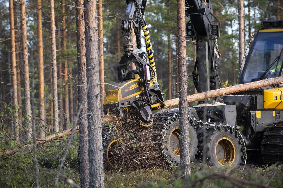 Miksi Metsähallitus hakkaa keskeneräistä metsää, ihmettelevät monet metsäomistajat – syynä laskentakaava ja tulospaineet