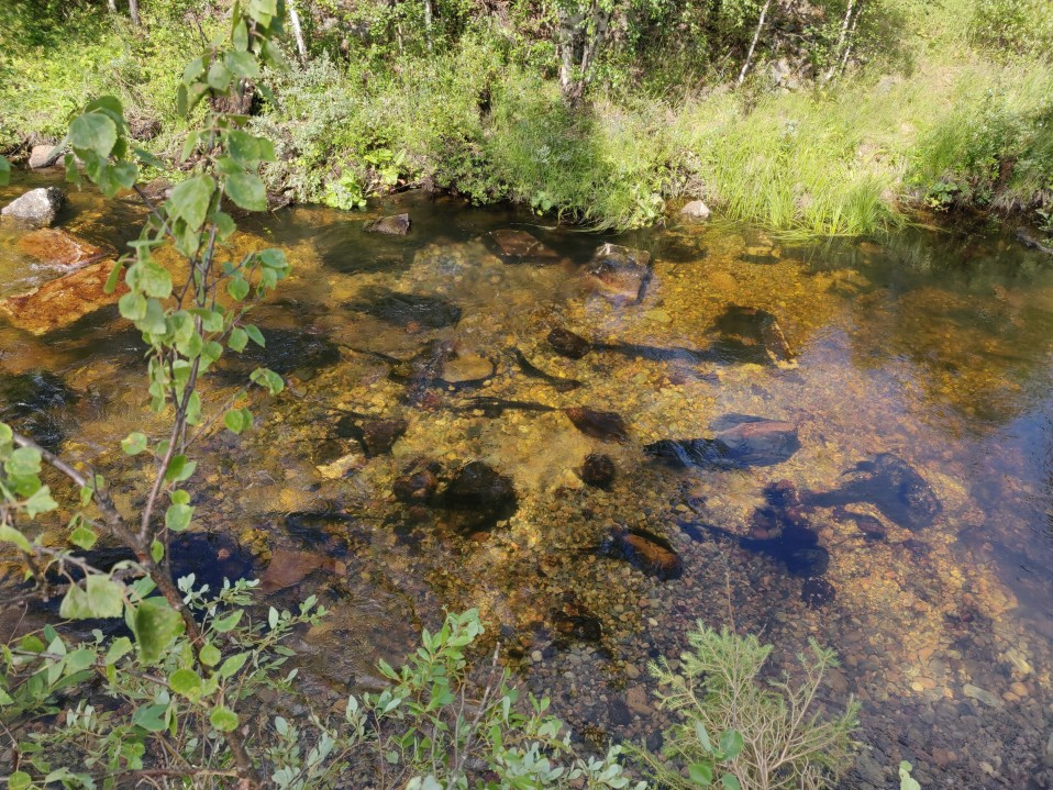 Round stone gravel has been used as a spawning ground for sea trout in Muonio, Koirakoski, Pakajoki, in August 2019.