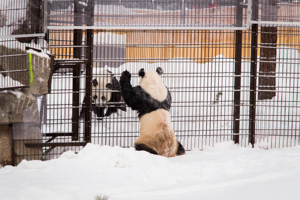 Lumi ja Pyry näkevät toisensa ulkoaitauksista ja pääsevät myös juttelemaan toisilleen.