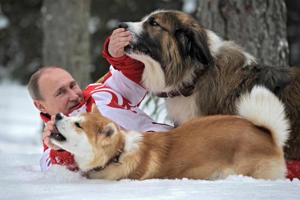 Putin painii koiriensa kanssa talvihangessa. Buffy-koira on lahja Bulgarialta ja Yume puolestaan Japanilta.