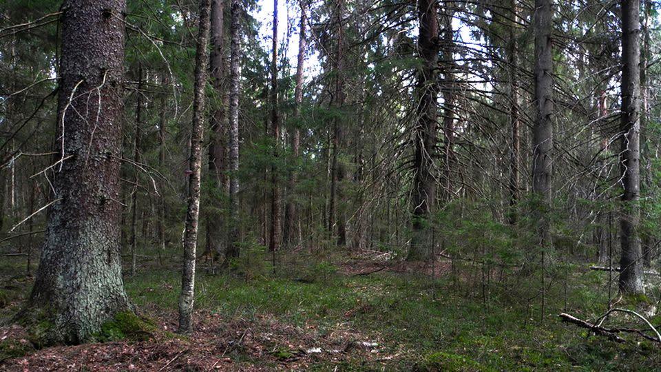 Luonto-Suomen metsätähtiä | Luonto-Suomi. | Radio | Areena | yle.fi