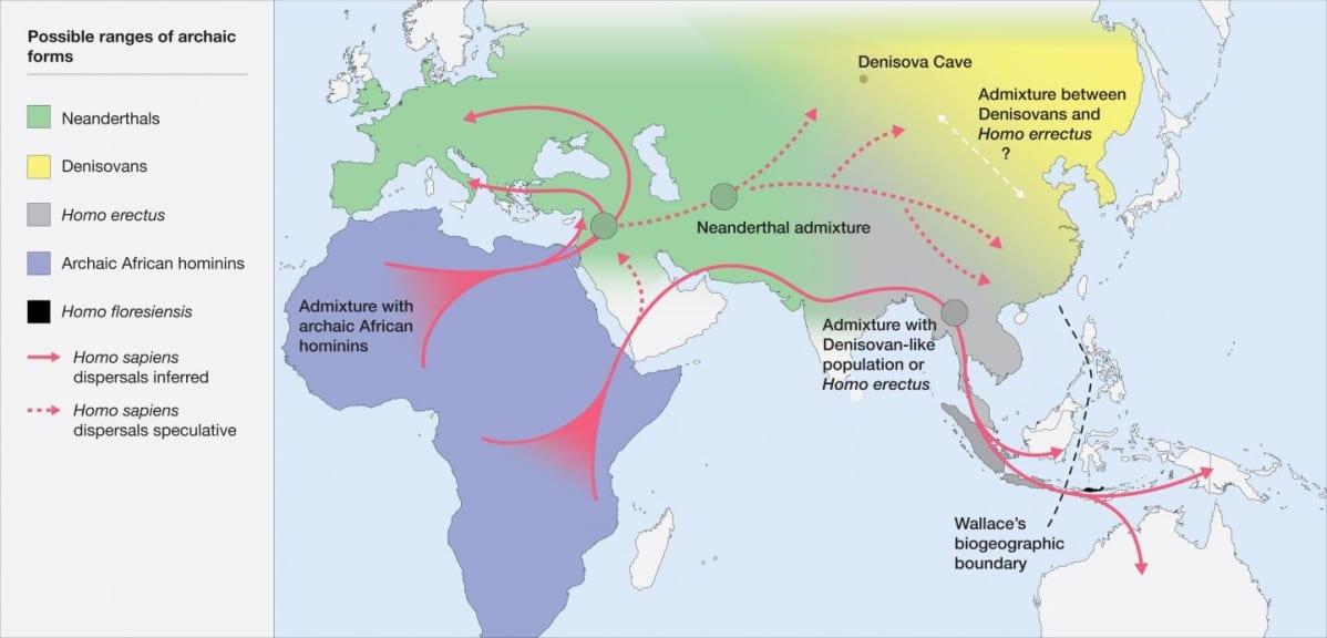 Maailmankartta, johon on väreillä ja nuoliviivoilla merkitty ihmiskunnan muuttoliike Afrikasta itään ja pohjoiseen.