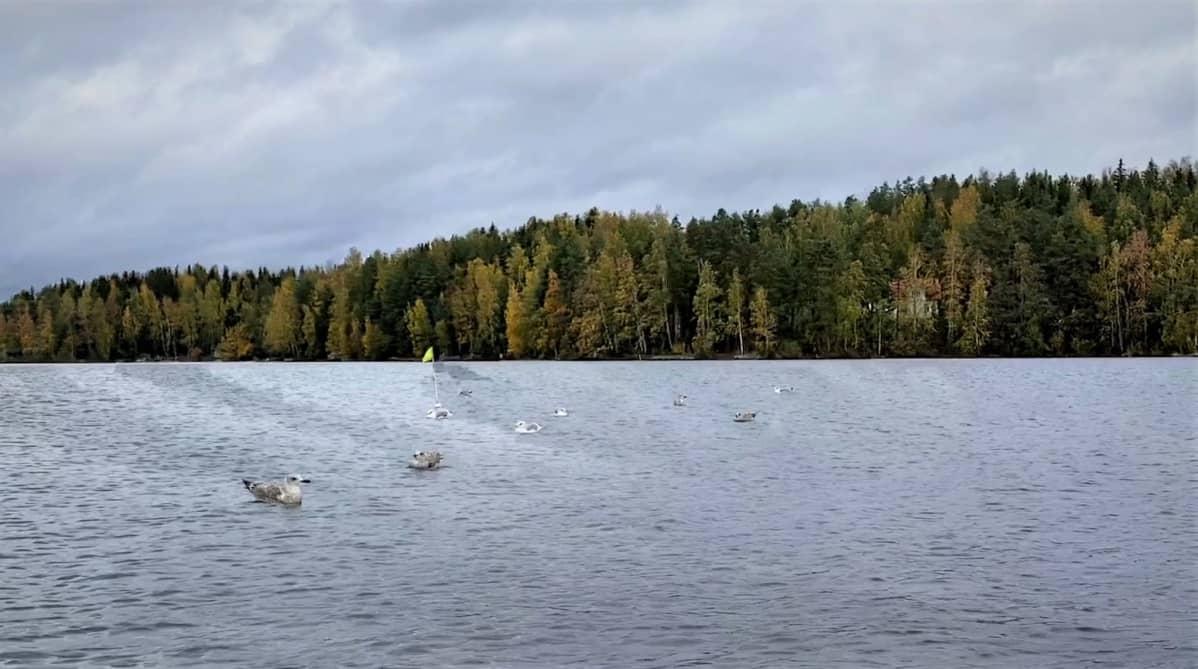 Lintuja järvellä