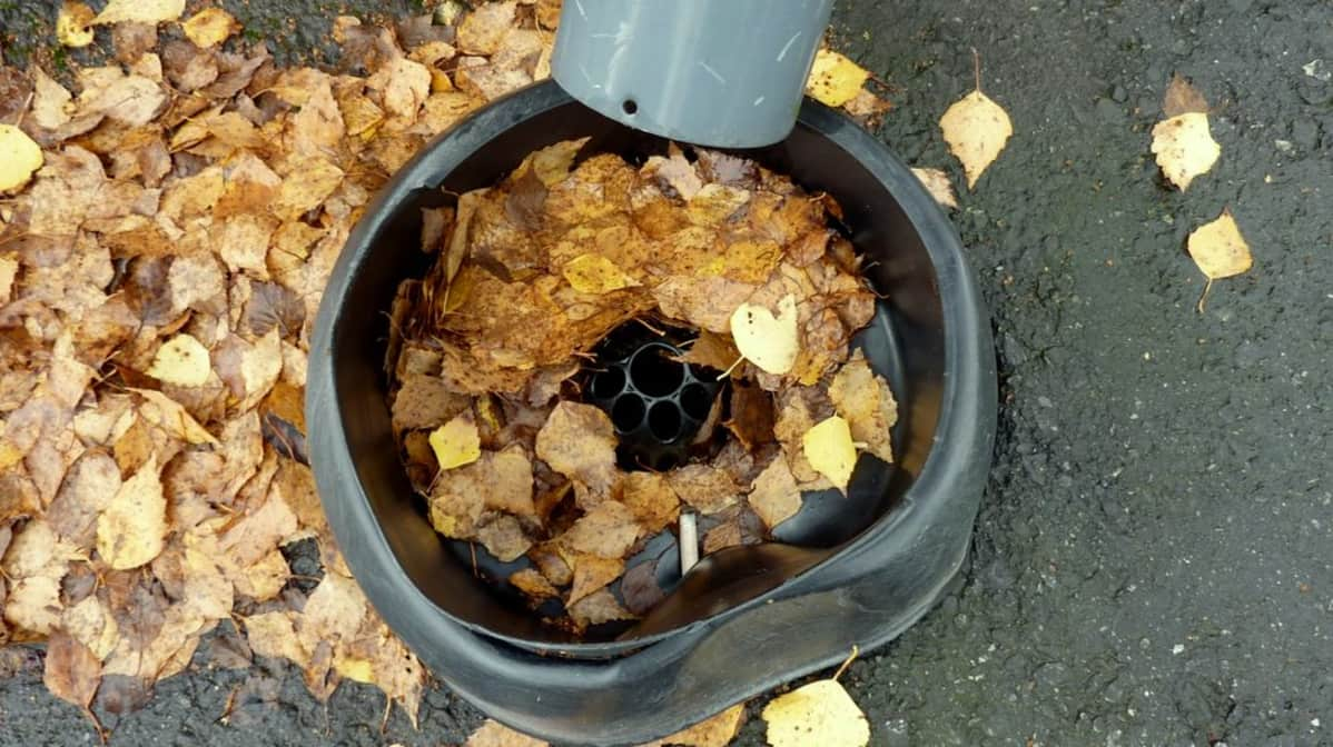 Sadevesikaivoon kertyy myös lehtiä ja roskaa.
