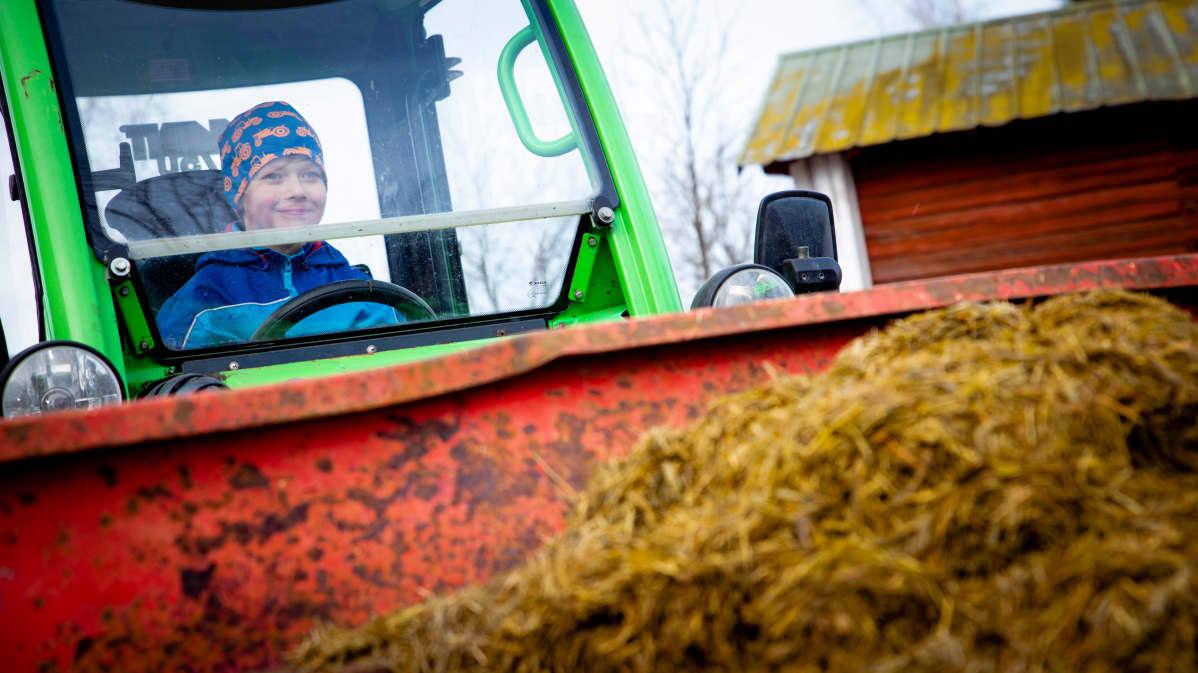 Yhdeksänvuotias Matias Anttila ajaa pienkuormaajalla rehua kyytöille.