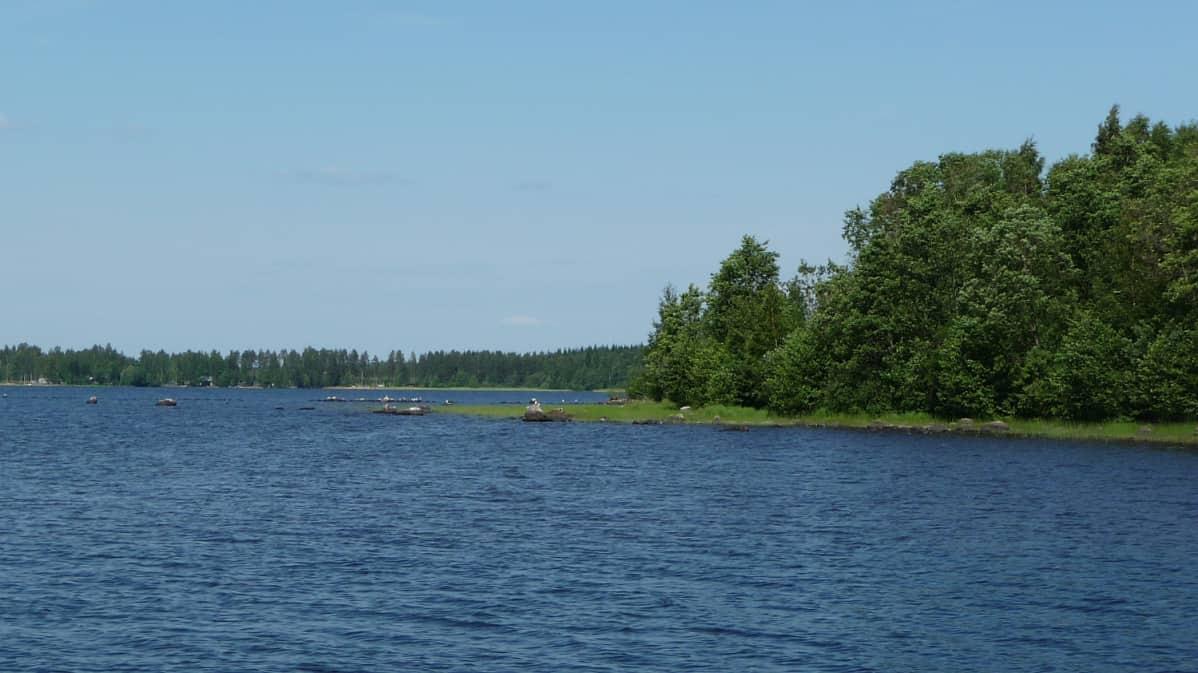 Järvimaisema Saimaalta.