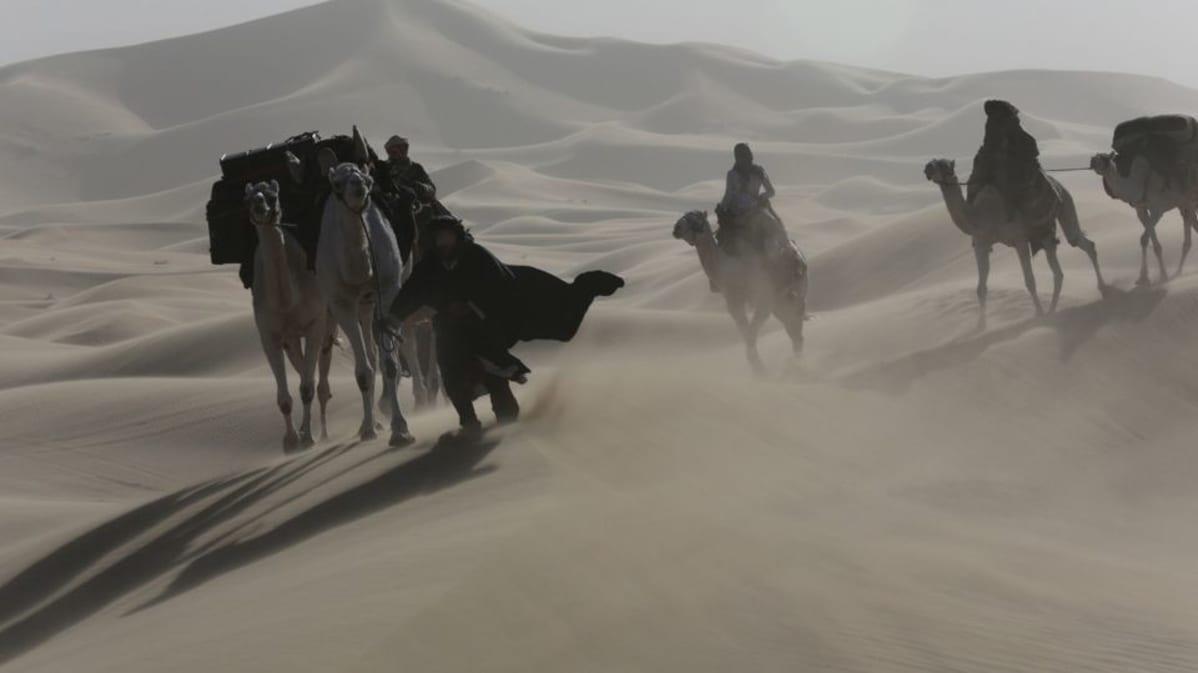Kameleita aavikolla.