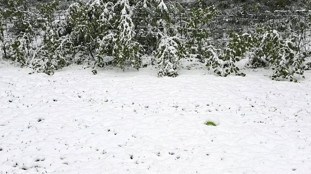 Lunta maassa kesäkuussa.
