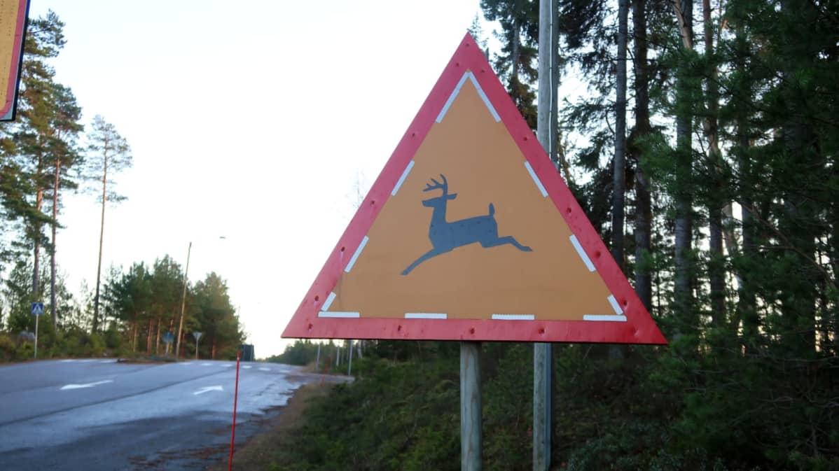 En varningstriangel som varnar för vitsvanshjort.