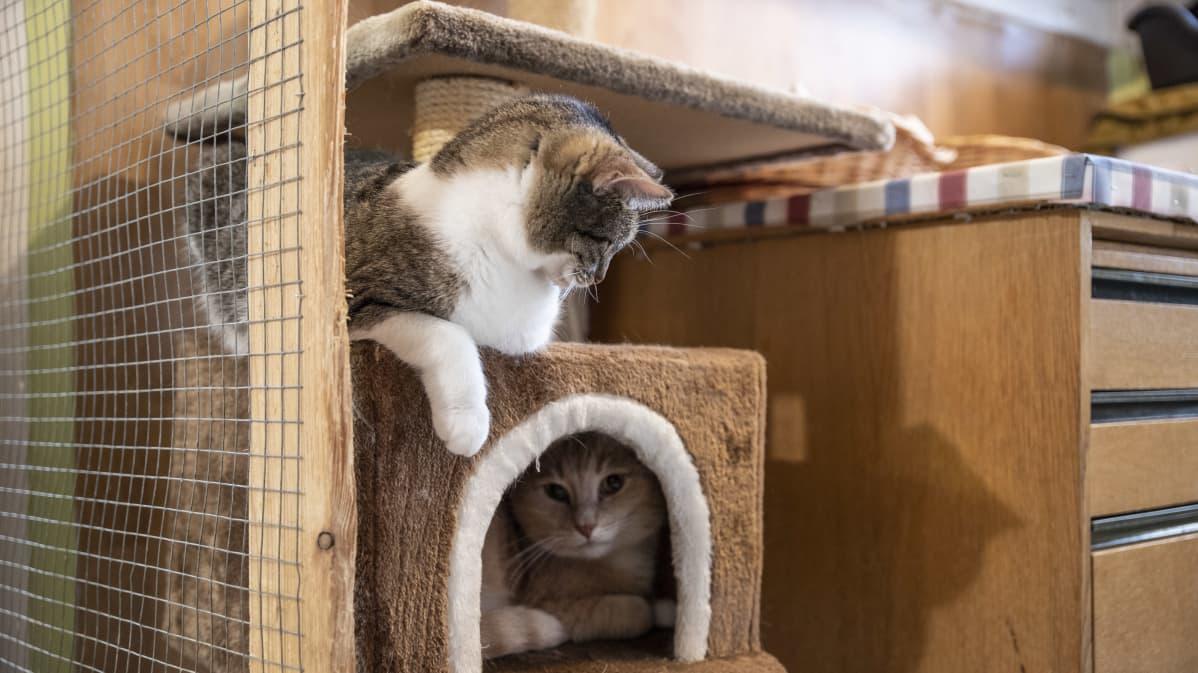 kaksi kissaa lähikuvassa