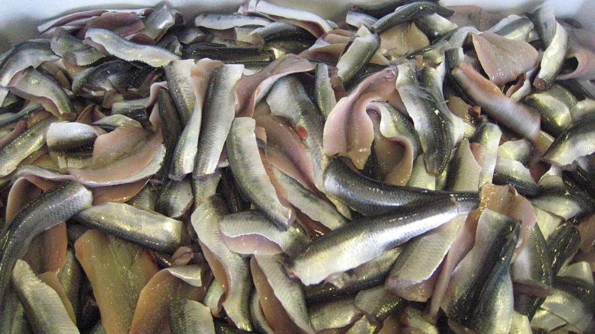kalastus kirjavainen