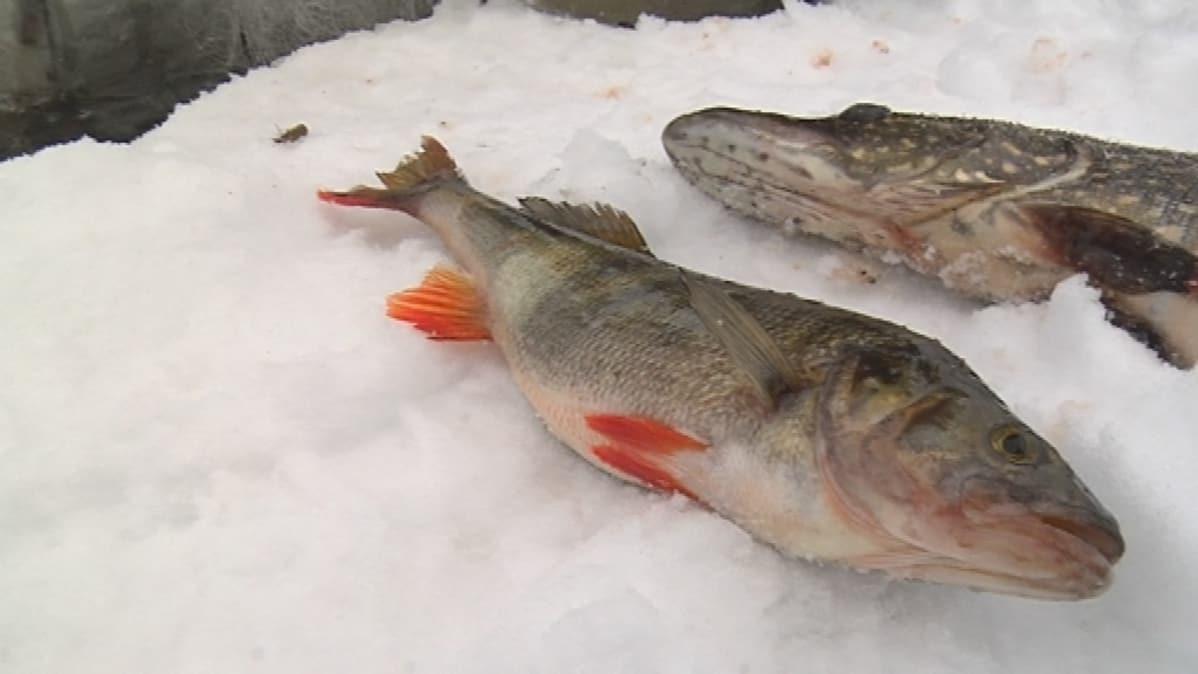 kalastuslaki