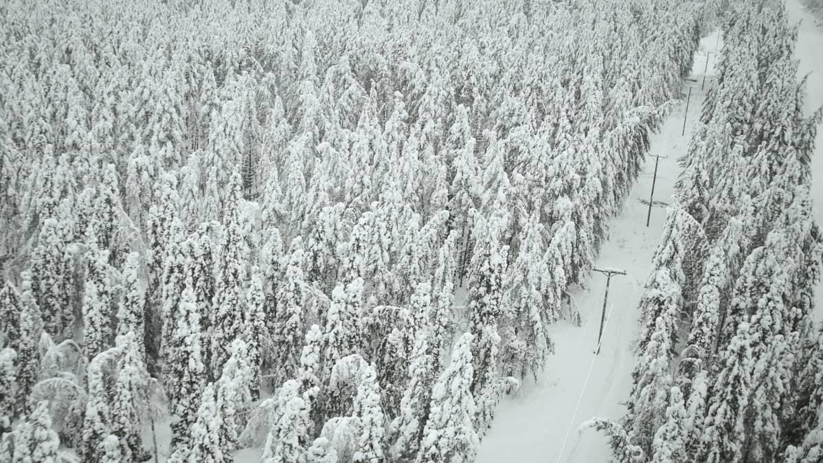 Lumista metsää helikoptreista kuvattuna.