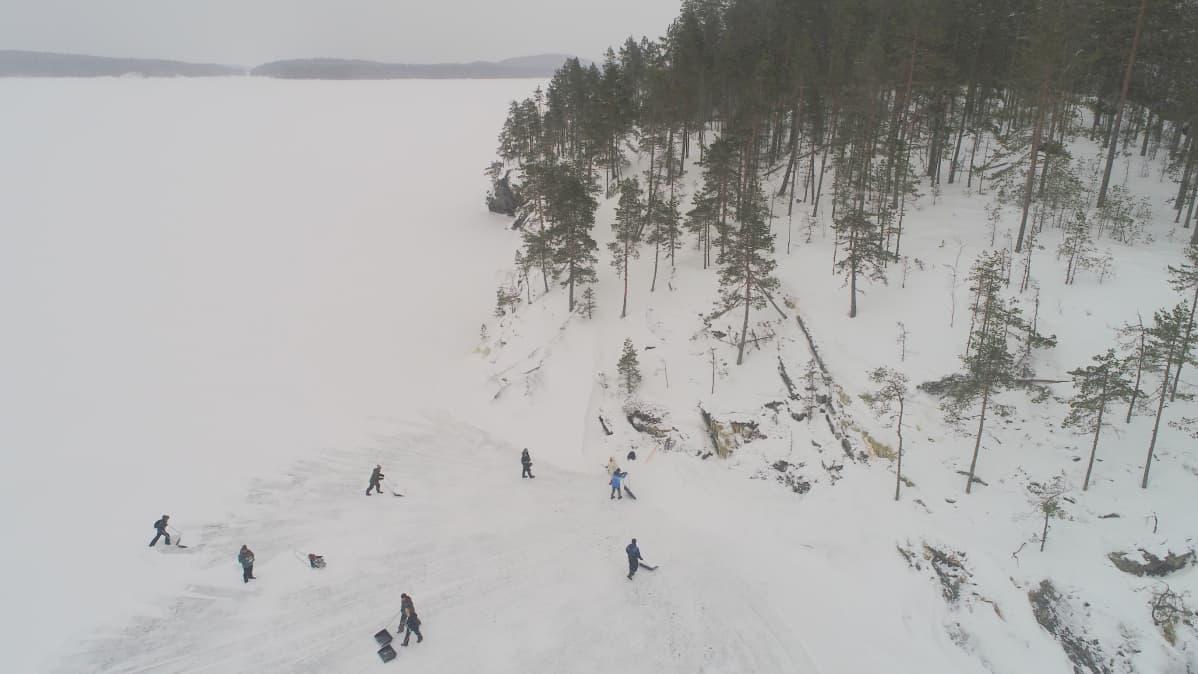 Vapaaehtoiset kolasivat saimaannorpalle pesäkinoksia Savonlinnan Pihlajavedellä viime helmikuun alussa.