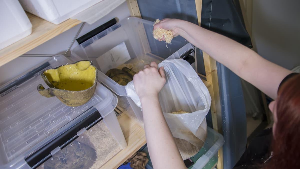 Nainen puhdistaa käärmeen kasvatuslaatikon pohjallisia.