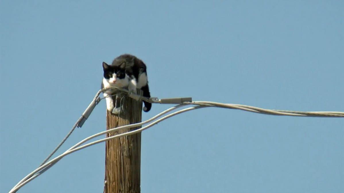 Kissa lyhtypylväässä.