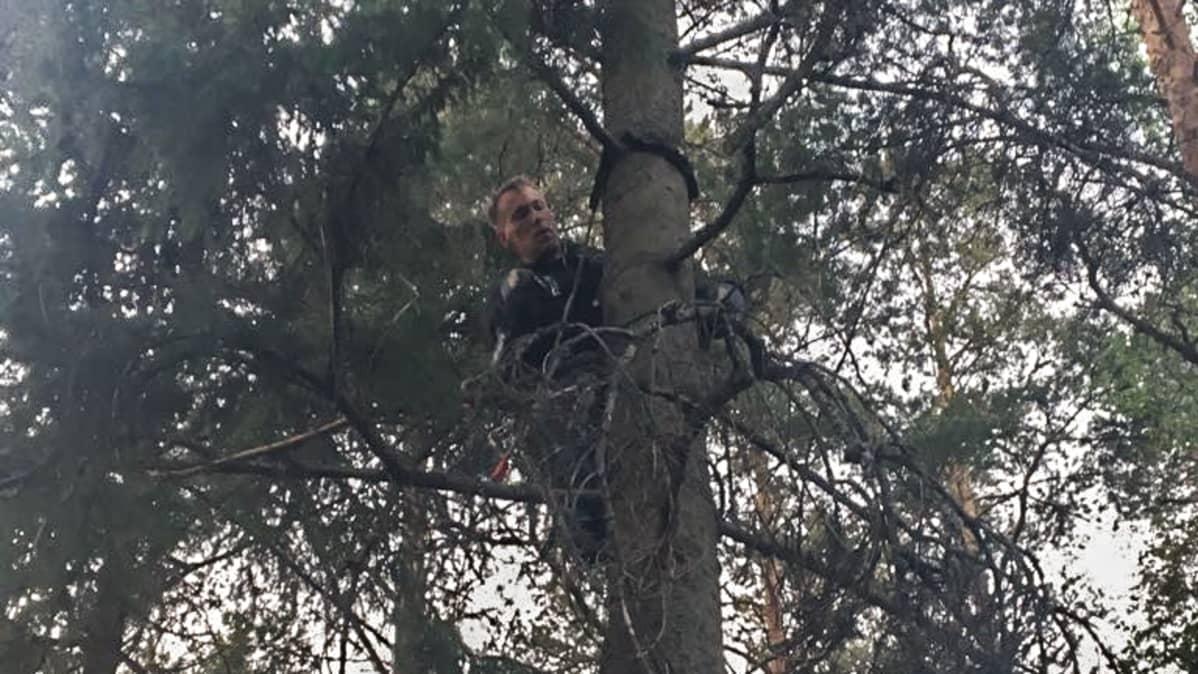 Kenneth Wickström puussa.