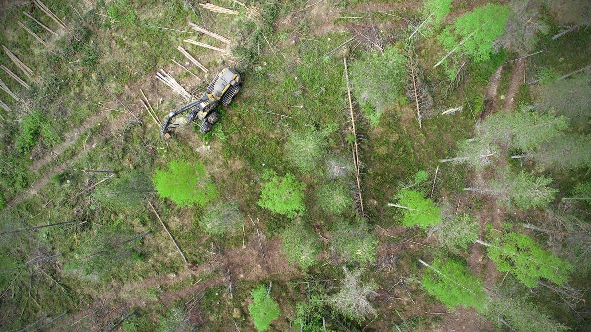 Metsäkone kaataa puita ja raivaa lumikuorman rikkomia puita.