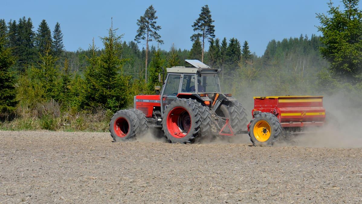 Maanviljelijä kylvää vehnää.