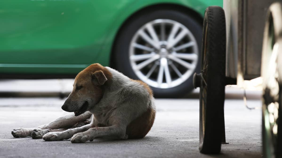 Koditon koira jalkakäytävällä.